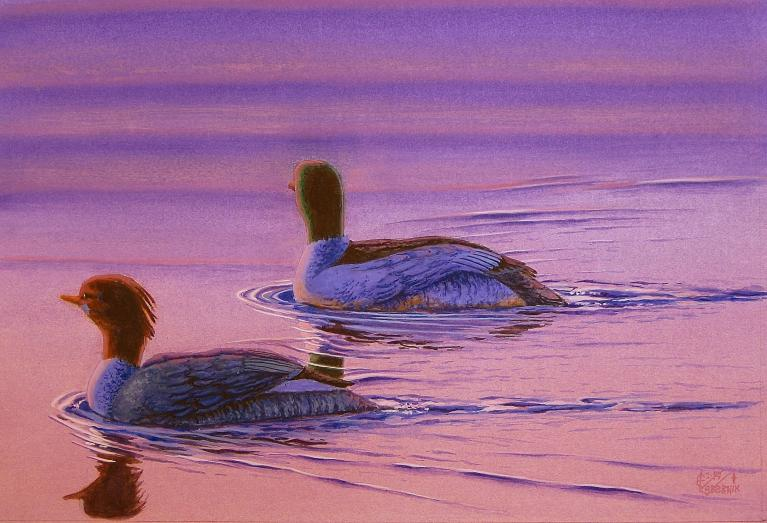 Merganser Sunset